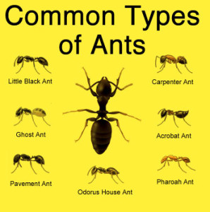 Image Result For Do It Yourself Home Pest Control