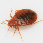 long-island-pest-pro-exterminating-bed-bugs