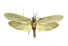 long-island-pest-pro-exterminating-clothes-moth