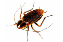 long-island-pest-pro-exterminating-roach