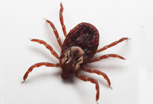 long-island-pest-pro-exterminating-tick